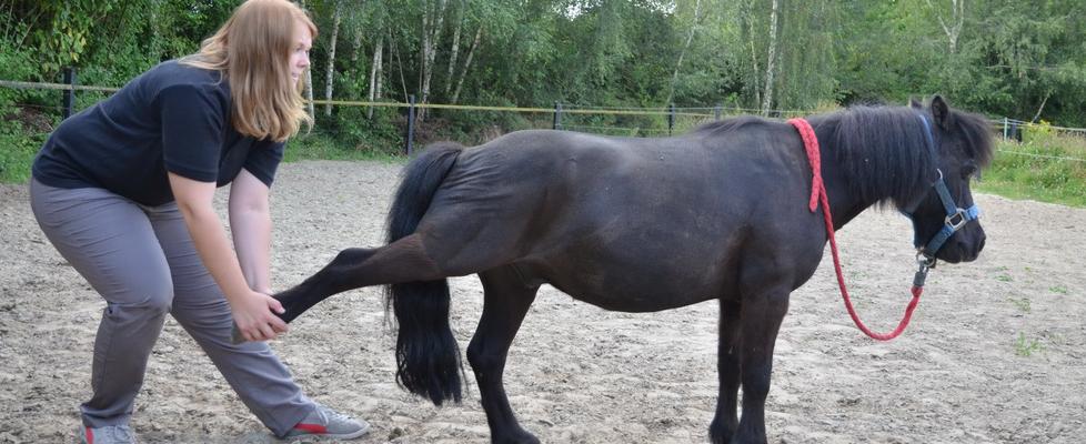 Tierphysiotherapie – Pferd